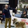 kolia-dlhosrsta-collie-rough-club-dog-show-holland 102.jpg