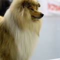 kolia-dlhosrsta-collie-rough-club-dog-show-holland 105.jpg