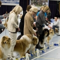 kolia-dlhosrsta-collie-rough-club-dog-show-holland 106.jpg