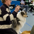 kolia-dlhosrsta-collie-rough-club-dog-show-holland 114.jpg