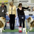 kolia-dlhosrsta-collie-rough-club-dog-show-holland 130.jpg