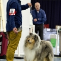kolia-dlhosrsta-collie-rough-club-dog-show-holland 133.jpg