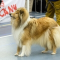 kolia-dlhosrsta-collie-rough-club-dog-show-holland 135.jpg