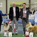 kolia-dlhosrsta-collie-rough-club-dog-show-holland 137.jpg