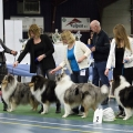 kolia-dlhosrsta-collie-rough-club-dog-show-holland 140.jpg
