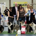 kolia-dlhosrsta-collie-rough-club-dog-show-holland 142.jpg