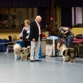 kolia-dlhosrsta-collie-rough-club-dog-show-holland 24.jpg