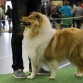 kolia-dlhosrsta-collie-rough-club-dog-show-holland 25.jpg