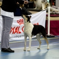 kolia-dlhosrsta-collie-rough-club-dog-show-holland 3.jpg