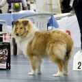 kolia-dlhosrsta-collie-rough-club-dog-show-holland 33.jpg