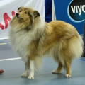 kolia-dlhosrsta-collie-rough-club-dog-show-holland 34.jpg