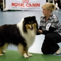 kolia-dlhosrsta-collie-rough-club-dog-show-holland 42.jpg