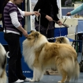 kolia-dlhosrsta-collie-rough-club-dog-show-holland 44.jpg
