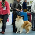 kolia-dlhosrsta-collie-rough-club-dog-show-holland 46.jpg