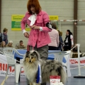 kolia-dlhosrsta-collie-rough-club-dog-show-holland 47.jpg