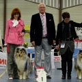kolia-dlhosrsta-collie-rough-club-dog-show-holland 48.jpg