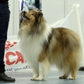 kolia-dlhosrsta-collie-rough-club-dog-show-holland 55.jpg