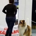 kolia-dlhosrsta-collie-rough-club-dog-show-holland 57.jpg