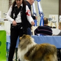 kolia-dlhosrsta-collie-rough-club-dog-show-holland 58.jpg