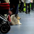 kolia-dlhosrsta-collie-rough-club-dog-show-holland 6.jpg