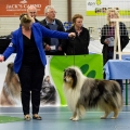 kolia-dlhosrsta-collie-rough-club-dog-show-holland 60.jpg