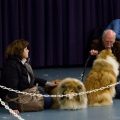 kolia-dlhosrsta-collie-rough-club-dog-show-holland 67.jpg
