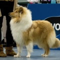 kolia-dlhosrsta-collie-rough-club-dog-show-holland 71.jpg
