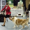 kolia-dlhosrsta-collie-rough-club-dog-show-holland 78.jpg
