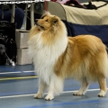 kolia-dlhosrsta-collie-rough-club-dog-show-holland 79.jpg