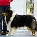 kolia-dlhosrsta-collie-rough-club-dog-show-holland 8.jpg