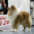 kolia-dlhosrsta-collie-rough-club-dog-show-holland 82.jpg