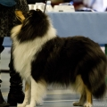 kolia-dlhosrsta-collie-rough-club-dog-show-holland 84.jpg