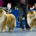 kolia-dlhosrsta-collie-rough-club-dog-show-holland 85.jpg