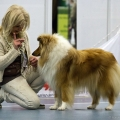 kolia-dlhosrsta-collie-rough-club-dog-show-holland 86.jpg