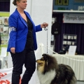 kolia-dlhosrsta-collie-rough-club-dog-show-holland 89.jpg