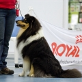 kolia-dlhosrsta-collie-rough-club-dog-show-holland 9.jpg