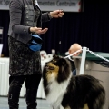 kolia-dlhosrsta-collie-rough-club-dog-show-holland 91.jpg