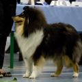 kolia-dlhosrsta-collie-rough-club-dog-show-holland 95.jpg