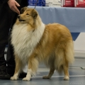 kolia-dlhosrsta-collie-rough-club-dog-show-holland 96.jpg
