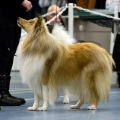 kolia-dlhosrsta-collie-rough-club-dog-show-holland 97.jpg