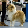kolia-dlhosrsta-collie-rough-club-dog-show-holland 98.jpg