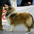 kolia-dlhosrsta-collie-rough-club-dog-show-holland 99.jpg