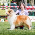 kolia-dlhosrsta-collie-rough-club-show-lucenec-2016 1.jpg