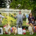 kolia-dlhosrsta-collie-rough-club-show-lucenec-2016 11.jpg