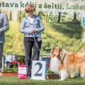 kolia-dlhosrsta-collie-rough-club-show-lucenec-2016 12.jpg