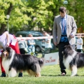 kolia-dlhosrsta-collie-rough-club-show-lucenec-2016 22.jpg