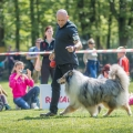kolia-dlhosrsta-collie-rough-club-show-lucenec-2016 24.jpg