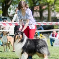 kolia-dlhosrsta-collie-rough-club-show-lucenec-2016 27.jpg