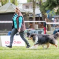 kolia-dlhosrsta-collie-rough-club-show-lucenec-2016 34.jpg