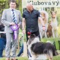 kolia-dlhosrsta-collie-rough-club-show-lucenec-2016 36.jpg